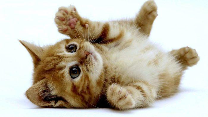 猫・犬のおしっこ クリーニング出せる?